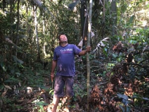 Luis Vergara examines a new abarco tree he has planted on his land in Colombia