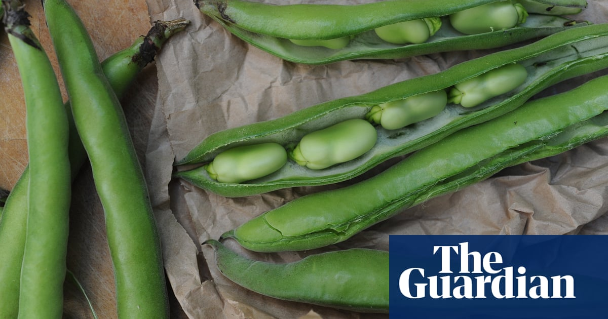 What can I do with a glut of broad beans? | Kitchen aide
