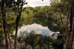 The cenotes are surrounded by vegetation