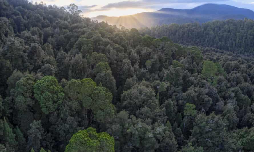 Part of the Tarkine Rainforest.