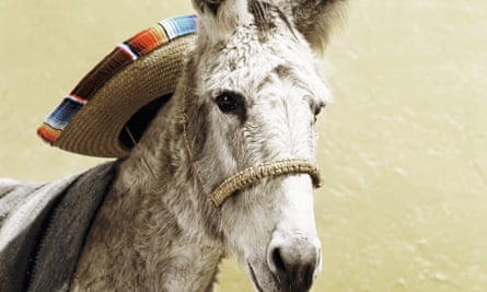 Wanted on suspicion of attempted murder? This sombrero wearing donkey fits the bill