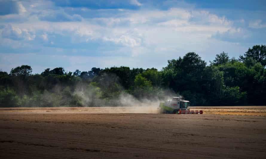 A combine harvester in a wheatfield
