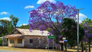 Jacarandas in the Queensland mining town of Cracow