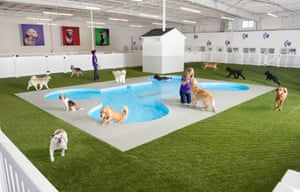 Artist rendering of Paradise 4 Paws, a holding area for dogs in a new luxury terminal at New York's John F. Kennedy international airport.
