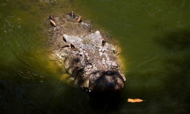 Man bitten by crocodile during tourist river cruise near Darwin