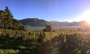Vineyard of Ricci Curbastro, Franciacorta, Italy.
