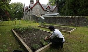 Chef Luca Sordi picks plants in the garden of the Saorsa 1875 vegan hotel