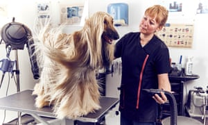 A woman blow dries a long-haired dog