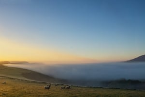 Kinder Scout view. Inquisitive sheep during a misty autumn sunrise taken from Jaggers Clough at the eastern edge of the Kinder Scout plateau with Lose Hill on the right and Win Hill on the left. Peak Nov2 5