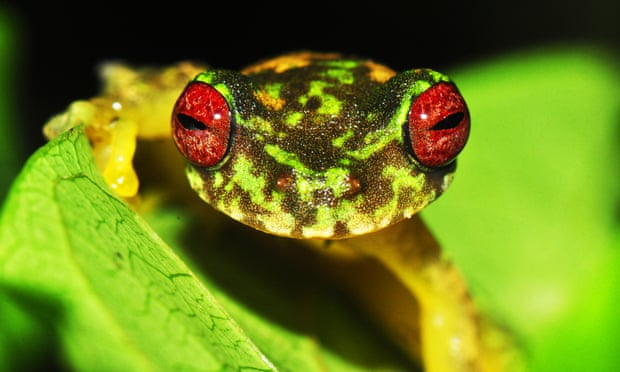 Deadly Fungus Has Decimated More Than 500 Amphibian Species