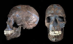 A skull found in the Qafzeh cave in Israal, among the earliest Eurasian homo sapiens to be found.