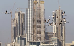 Migrating flamingoes fly past buildings under construction in Dubai, United Arab Emirates