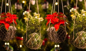 Kokedama – living baubles - at Wisley.