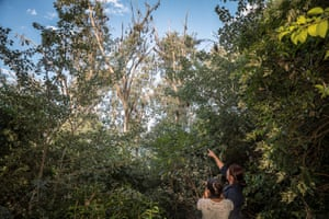 Lisa Roberts and her daughter Lola photograph the flying foxes at the site of the proposed stage-two clearing.