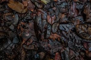Dead leaves on the jungle floor