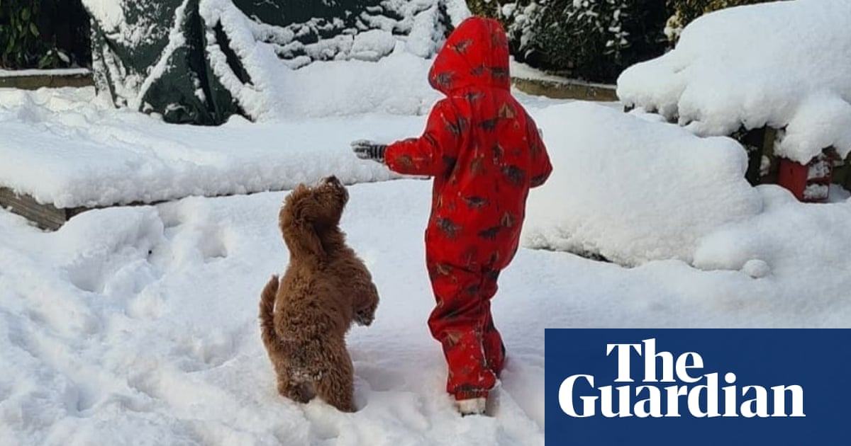 'World turned upside down': therapy dog stolen from boy, five