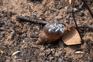 The shell of a snail reveals how fire affects creatures both large and small.