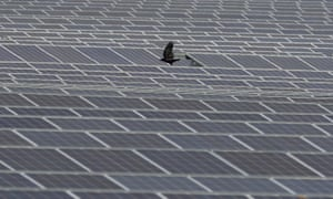 A crow flies over panels at Clayhill solar power farm in Westoning, UK.