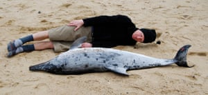 Author and creator of The Tale Philip Hoare with a dolphin.