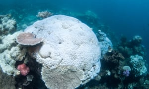 Images released by Greenpeace add to what the US National Oceanic and Atmospheric Administration has described as reports of 'scattered coral bleaching along a large stretch' of the reef