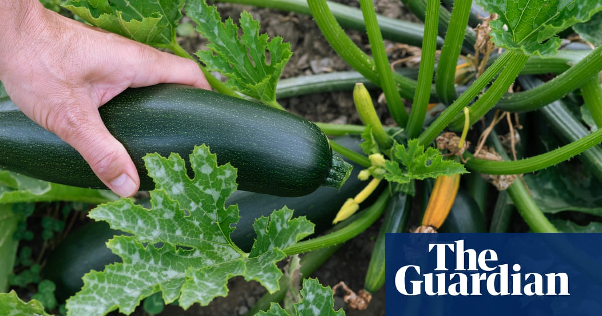 Tim Dowling: which courgette is the evil poisoner, yellow or green?