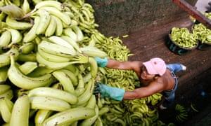 A worker loads bananas at a market in Tegucigalpa, Honduras