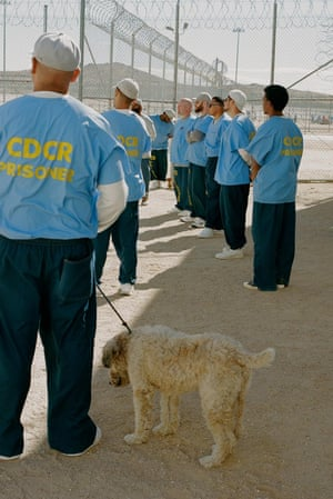 'Working with the dogs, prejudice just breaks down': inmates on the programme.