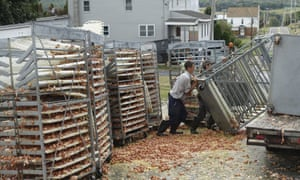 In total, 11,340 dozen eggs and 2,260 gallons of egg product were lost after the load shifted and fell off the truck.