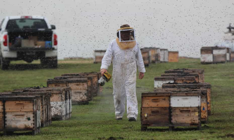 A beekeeper in California with his hives.
