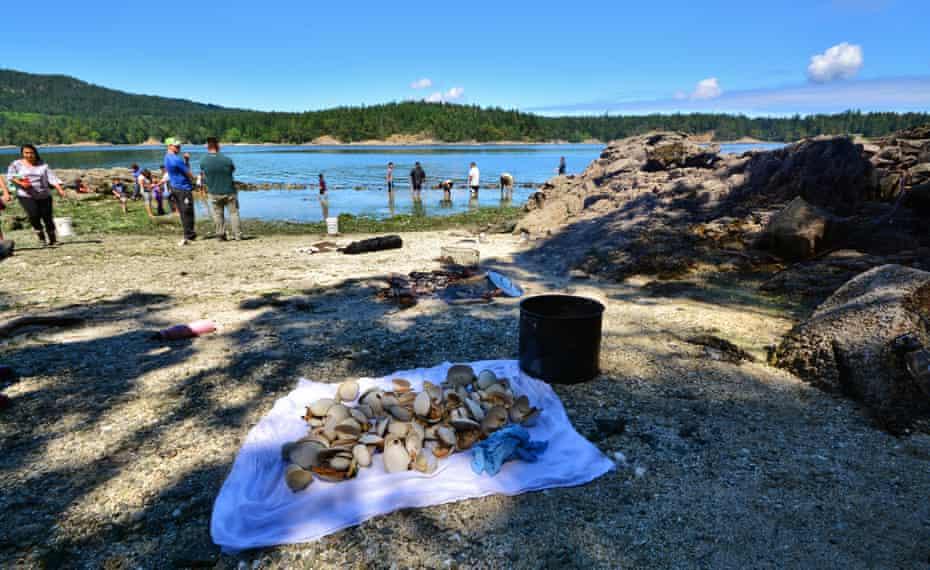 clams at clam garden