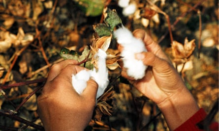 A girl harvests cotton in Yangiabad, Uzbekistan.