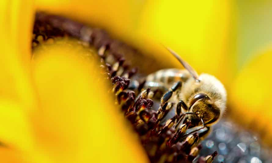 Neonicotinoid pesticides have been linked to the serious decline in bee populations.