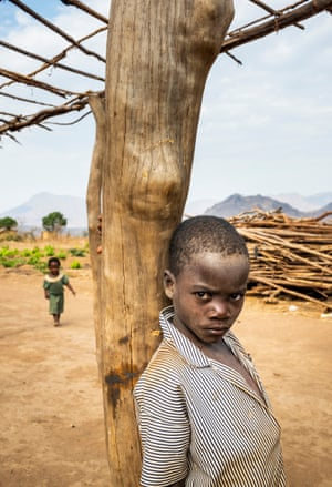 A boy, 8, stands next to a trunk from a Jenga tree which is being used as a supporting pole for tobacco drying sheds in Malawi