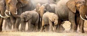 An elephant clan in northern Kenya