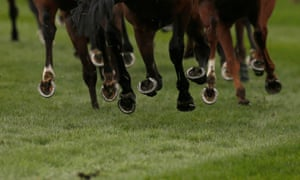 Horses during a race.