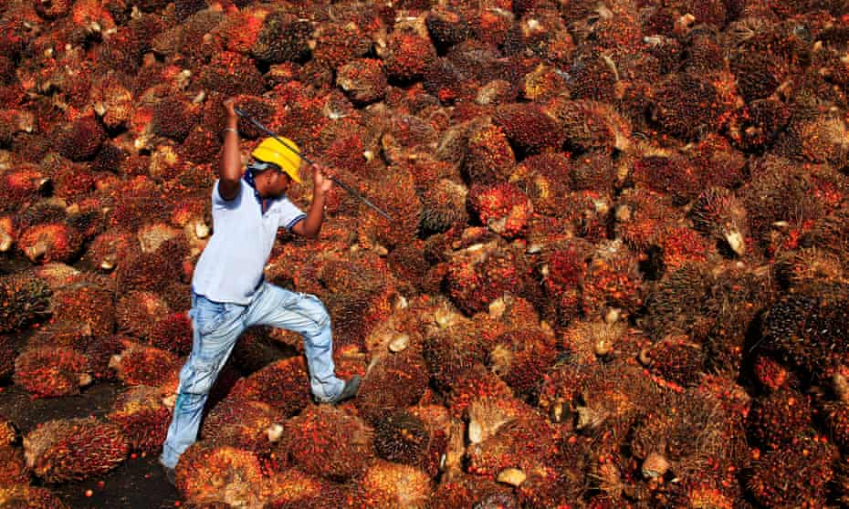 A worker collects palm oil fruit inside a palm oil factory in near Kuala Lumpur.