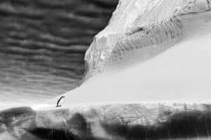 A single chinstrap penguin on top of a giant iceberg.
