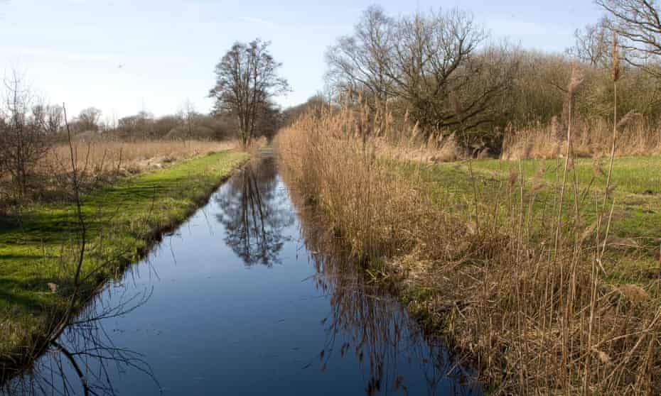 Woodwalton Fen near Ramsey is one of the last fragments of ancient fen to survive.