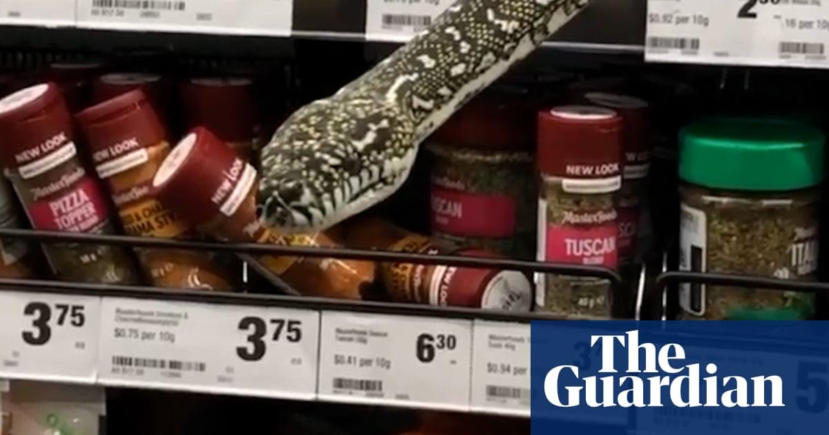 Snake shocks Sydney shoppers by slithering along supermarket spice shelf