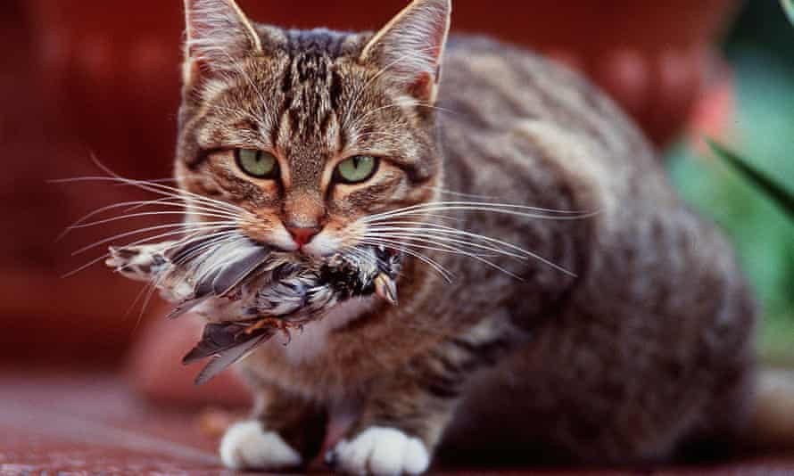 Housecat with a bird in its mouth