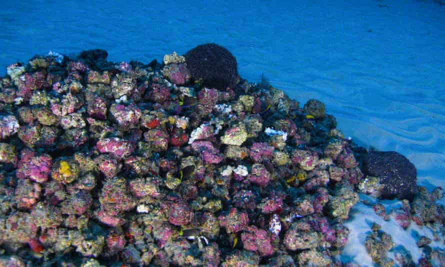 The unique reef system astonished marine biologists when its existence was widely revealed last year.