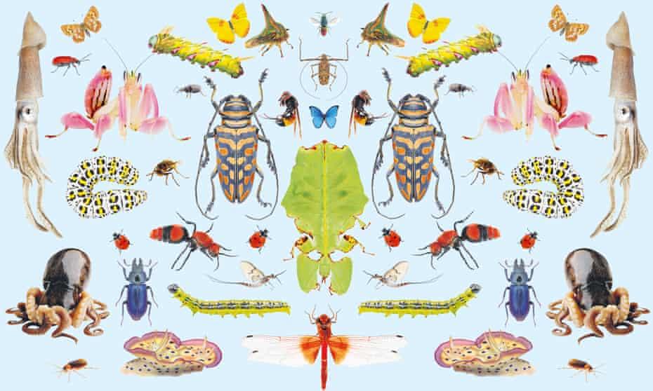 composite image of invertebrates