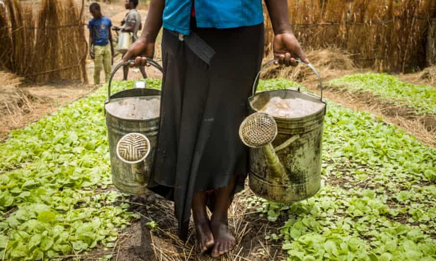 Tobacco farming in Malawi