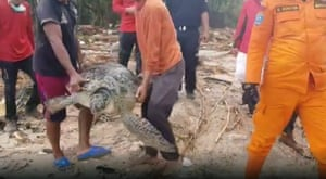 Men carry a sea turtle back to shore during wildlife rescue efforts in the aftermath of the tsunami in Tanjung Lesung, Indonesia, on 22 December.