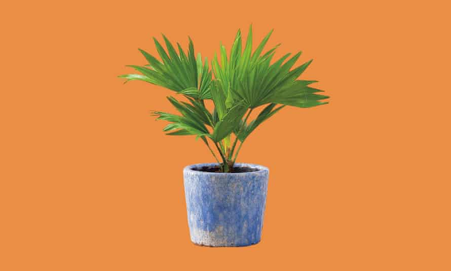 Last PLANT