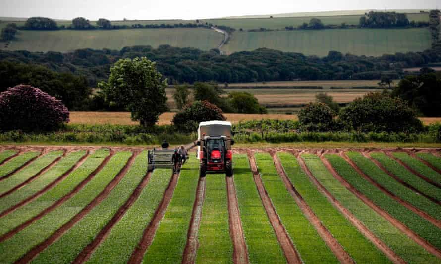 farming in uk
