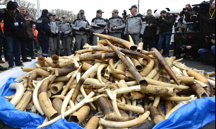 Three tons of seized illegal ivory was destroyed in Paris in 2014.