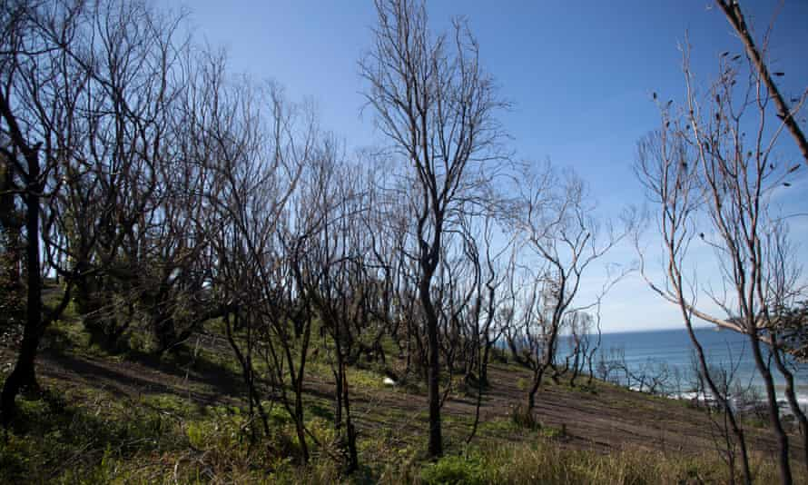 Burnt trees show the scars of the summer fires at McKenzies Beach on the south coast of NSW