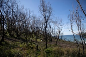 Burnt trees on the headland above McKenzies beach in the aftermath of the summer fires