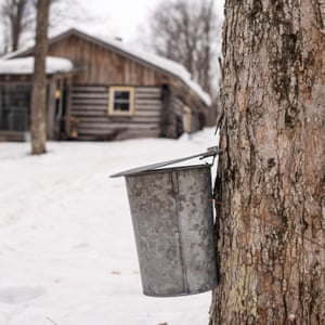 A maple syrup tap.